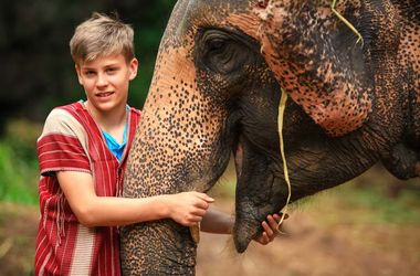Thailand Tiere Im Zimmer